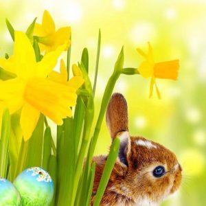 Por Pascua 2017 envíos gratis